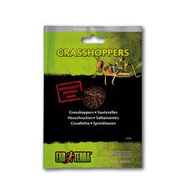 Exo Terra Exo Terra Reptile Food Grasshoppers 15g
