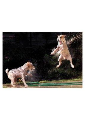 Palm Press Dogs in Sprinkler