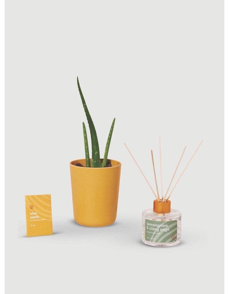 Modern Sprout Find Balance-Grounding Aloe Kit