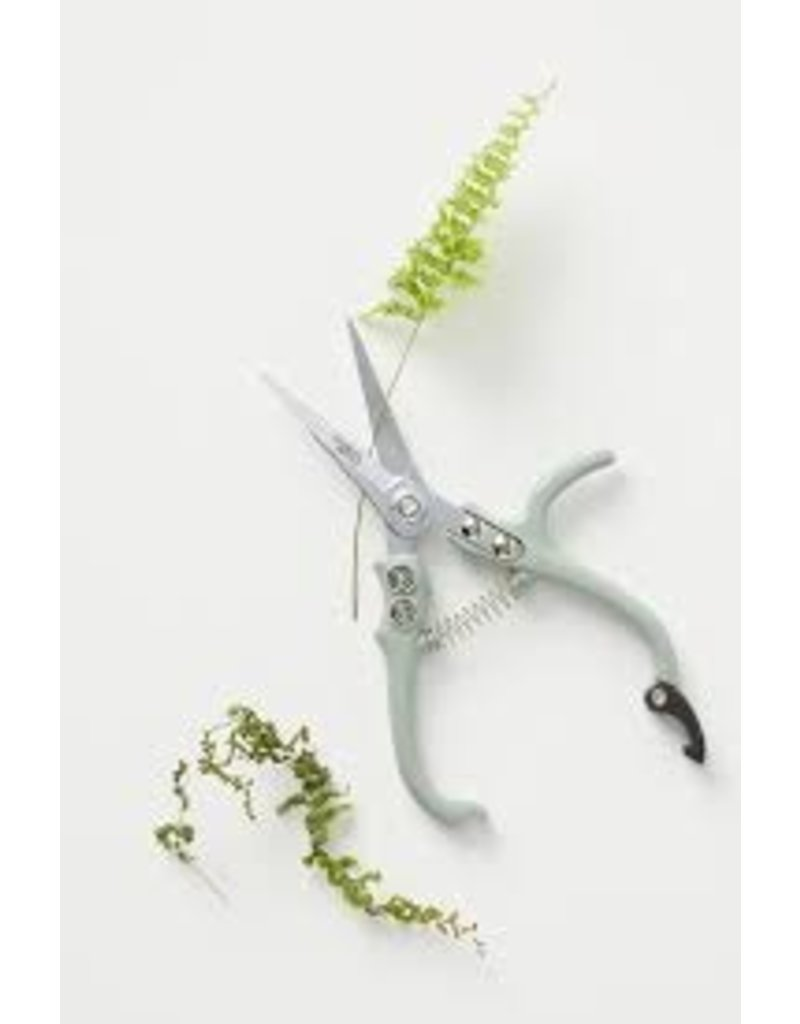 Modern Sprout Pruning Shears