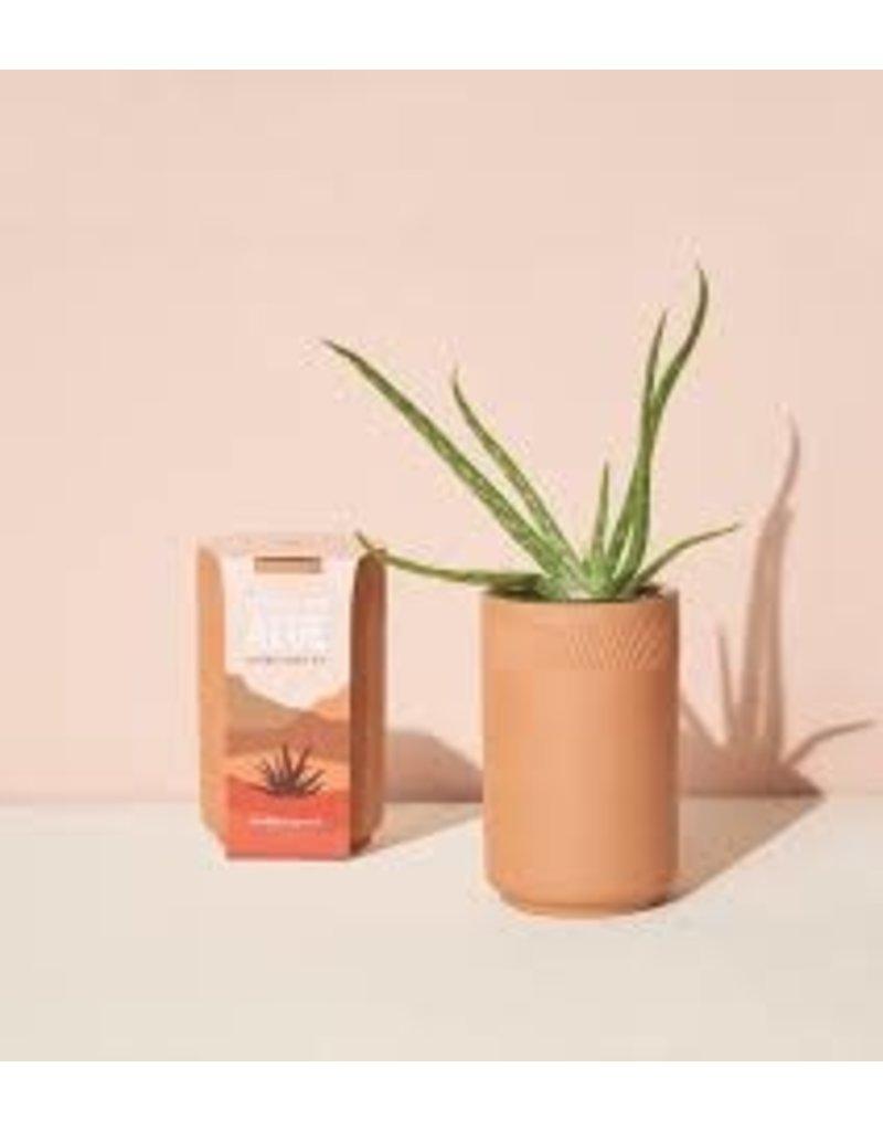 Modern Sprout Terracotta Planter Kit - Aloe