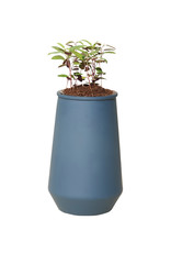 Modern Sprout Tapered Tumbler-Eucalyptus