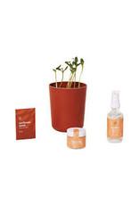 Modern Sprout Shine Bright- Radiate Positivity Kit