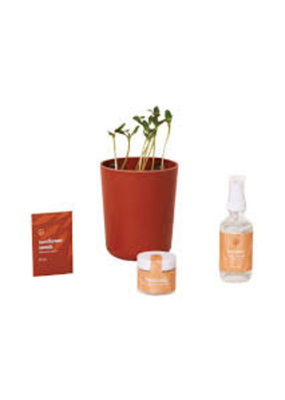 Modern Sprout Shine Bright- Radiate Positivity Kit