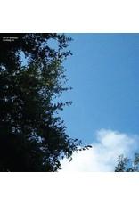 New Vinyl Cloud Nothings - Turning On LP