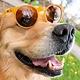 Circle G Goodr Running Sunglasses - Bodhi's UItimate Ride