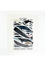Kelzuki/Consignment Mini Print Consignment - Cetacea