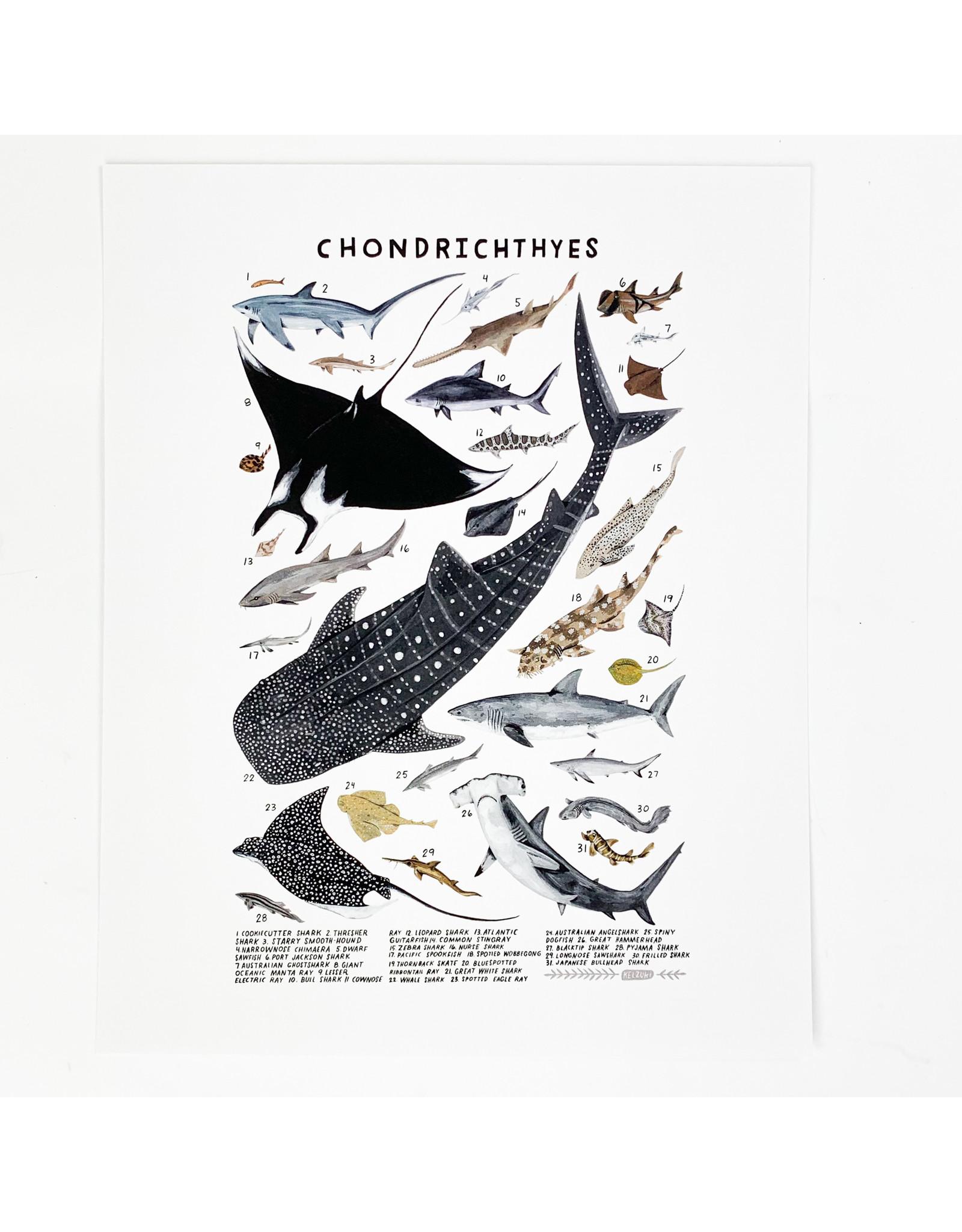 Kelzuki/Consignment Mini Print Consignment - Chondrichthyes