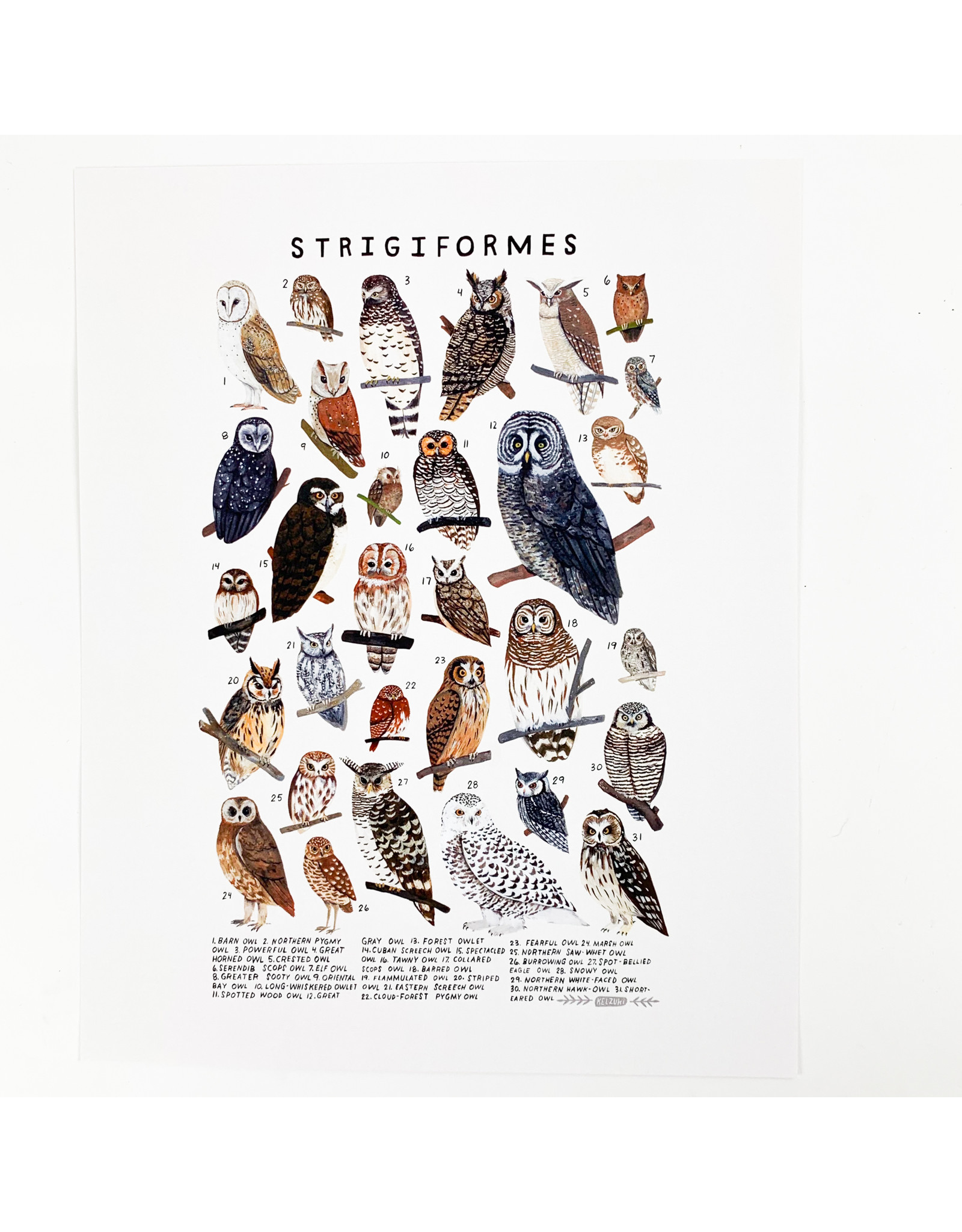 Kelzuki/Consignment Strigiformes prints/Consignment