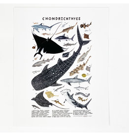 Kelzuki/Consignment Chondrichtyes Print/ Consignment