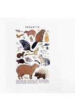 Kelzuki/Consignment Rodentia Print/Consignment