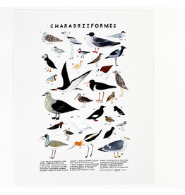 Kelzuki/Consignment Charadriiformes Print/Consignment