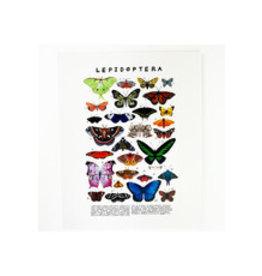 Kelzuki/Consignment Lepidoptera  Print-consignment