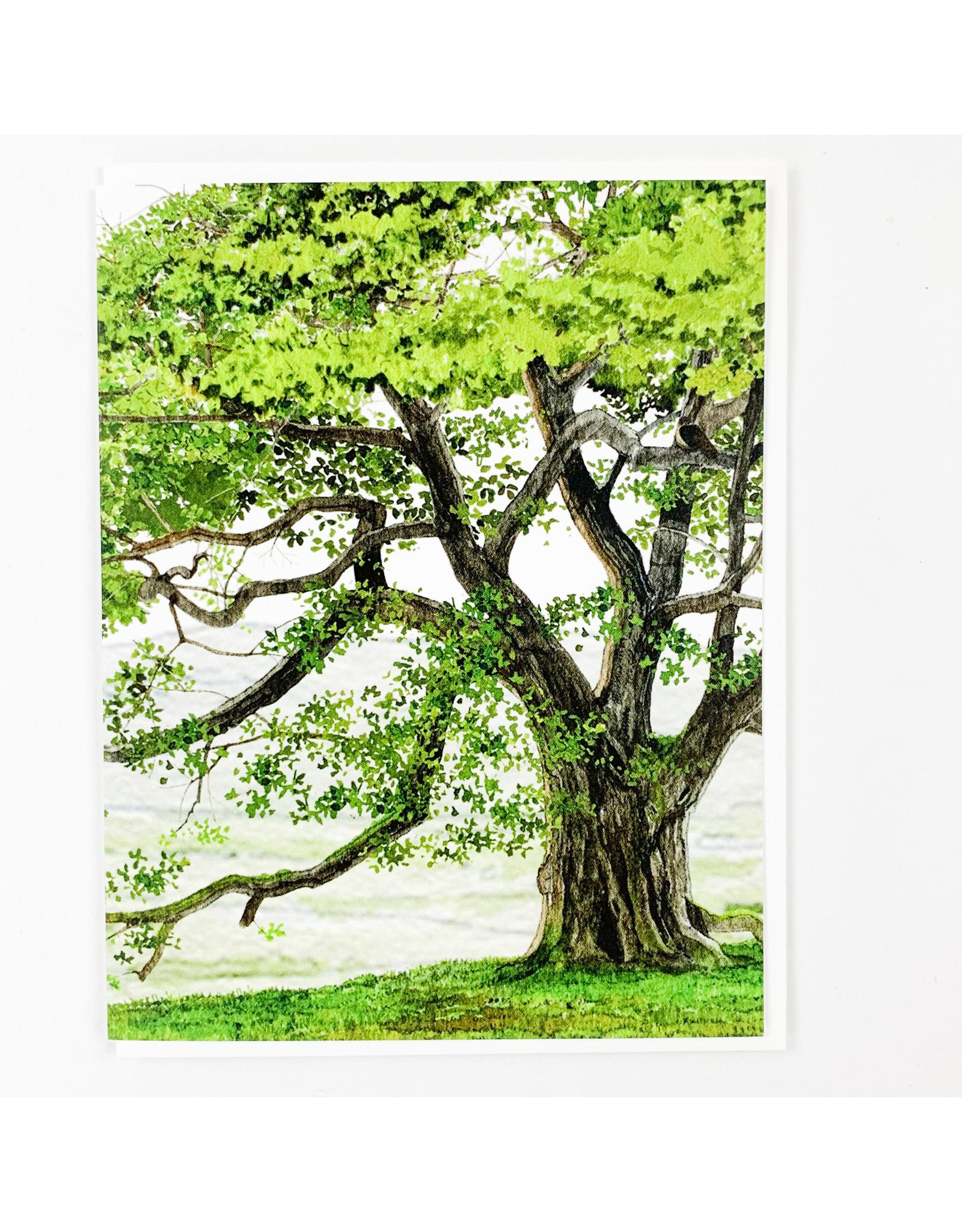 Felix Doolittle English Oak
