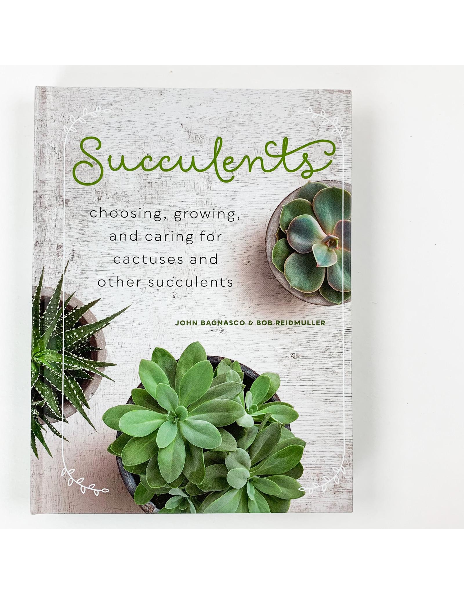 Hachette Succulents
