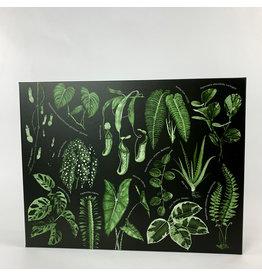 Penguin Group Leaf Supply House Plant