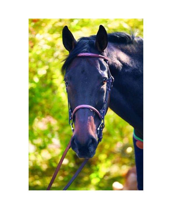 Bride HDR Fancy - Pony