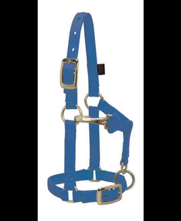 Licol Weaver Mini Average - Bleu royal