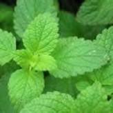 Spearmint or Yerba Buena Herb  1 oz