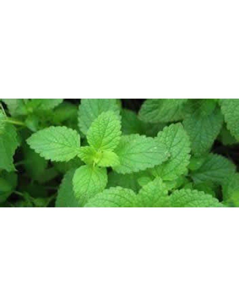 Spearmint or Yerba Buena Herb  1 lb