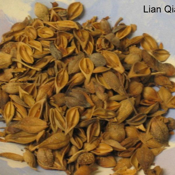 Copy of Lian Qiao Forsythia Fruit 1 oz