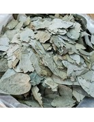 Eucalyptus Leaves cut and sifted  1 oz