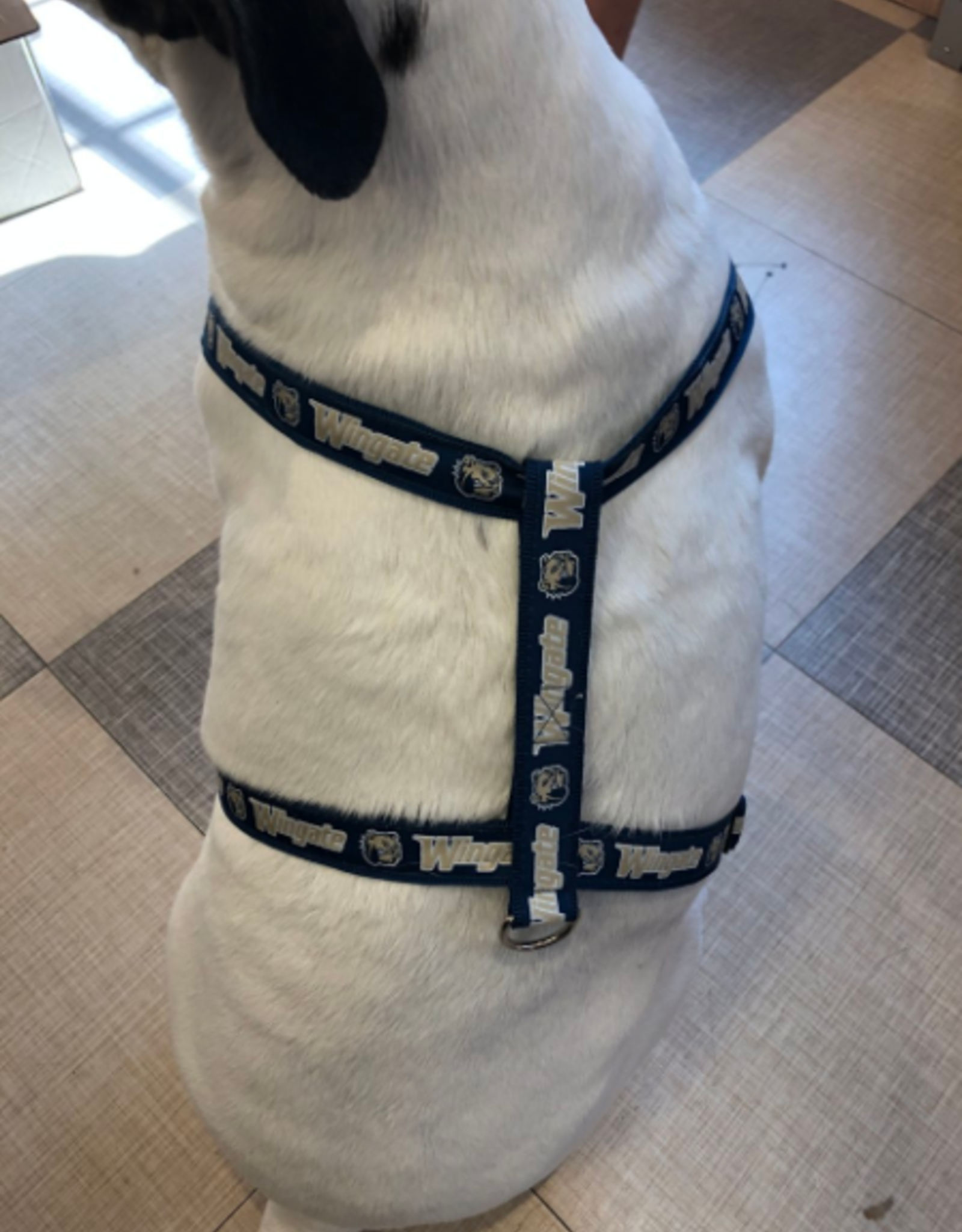 Embroidered Wingate Dog Harness