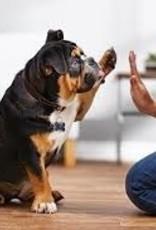 Training - Beginner's Level Basic Obedience Program
