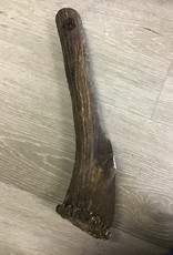 ELK USA Elk Massive Whole Antler