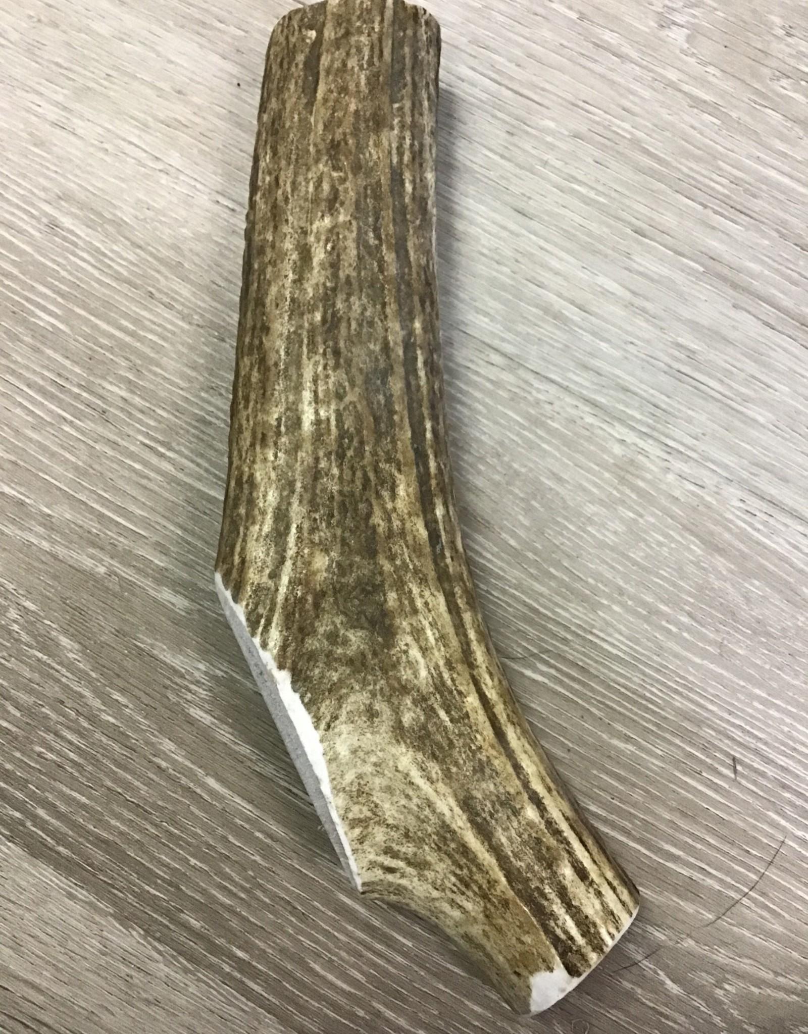 Whole Large Antler