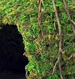 """GALAPAGOS GALAPAGOS DOME MOSSY GREEN 6"""""""