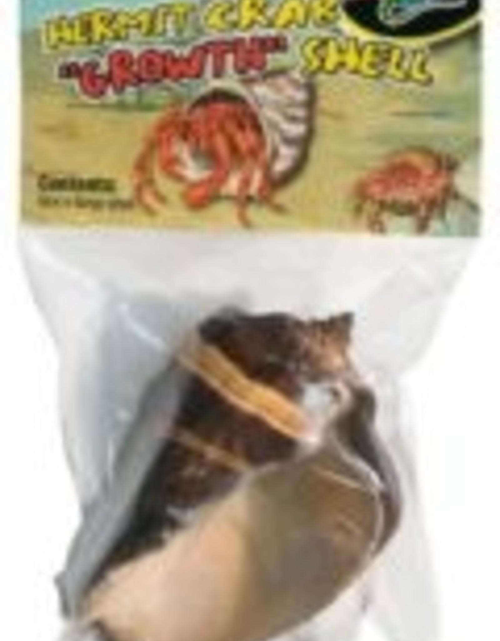 Hermit crab shell feeder