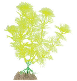 GLOFISH YELLOW FERN MD