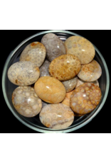 Coral Fossil Palm Stone