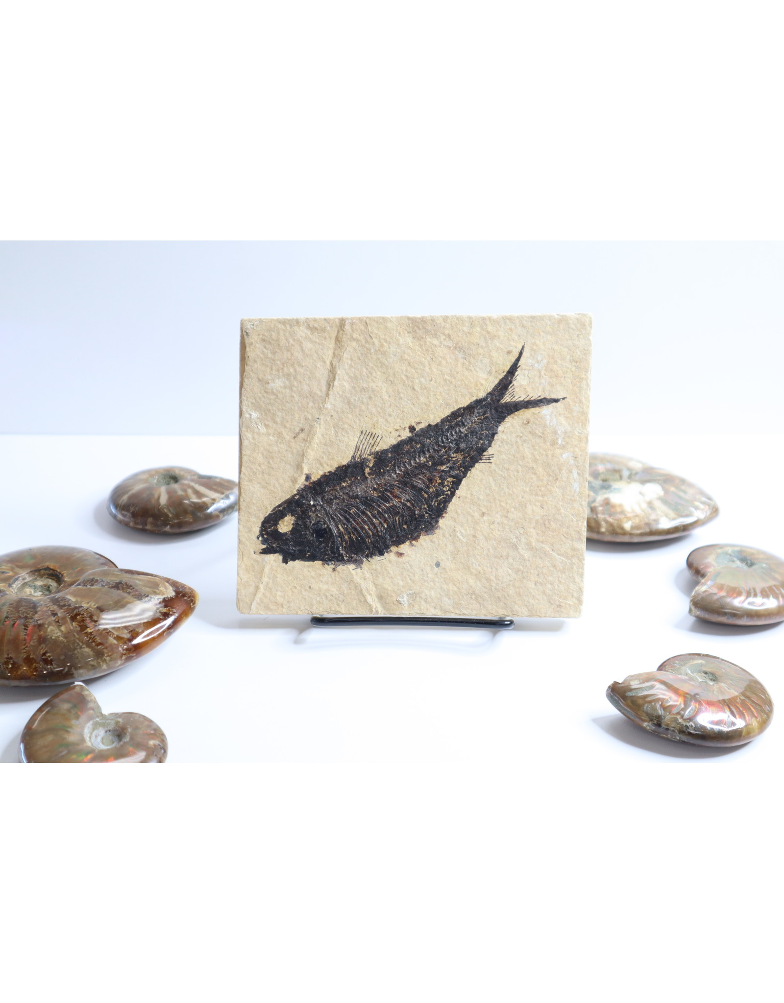 Fossilized Fish #1