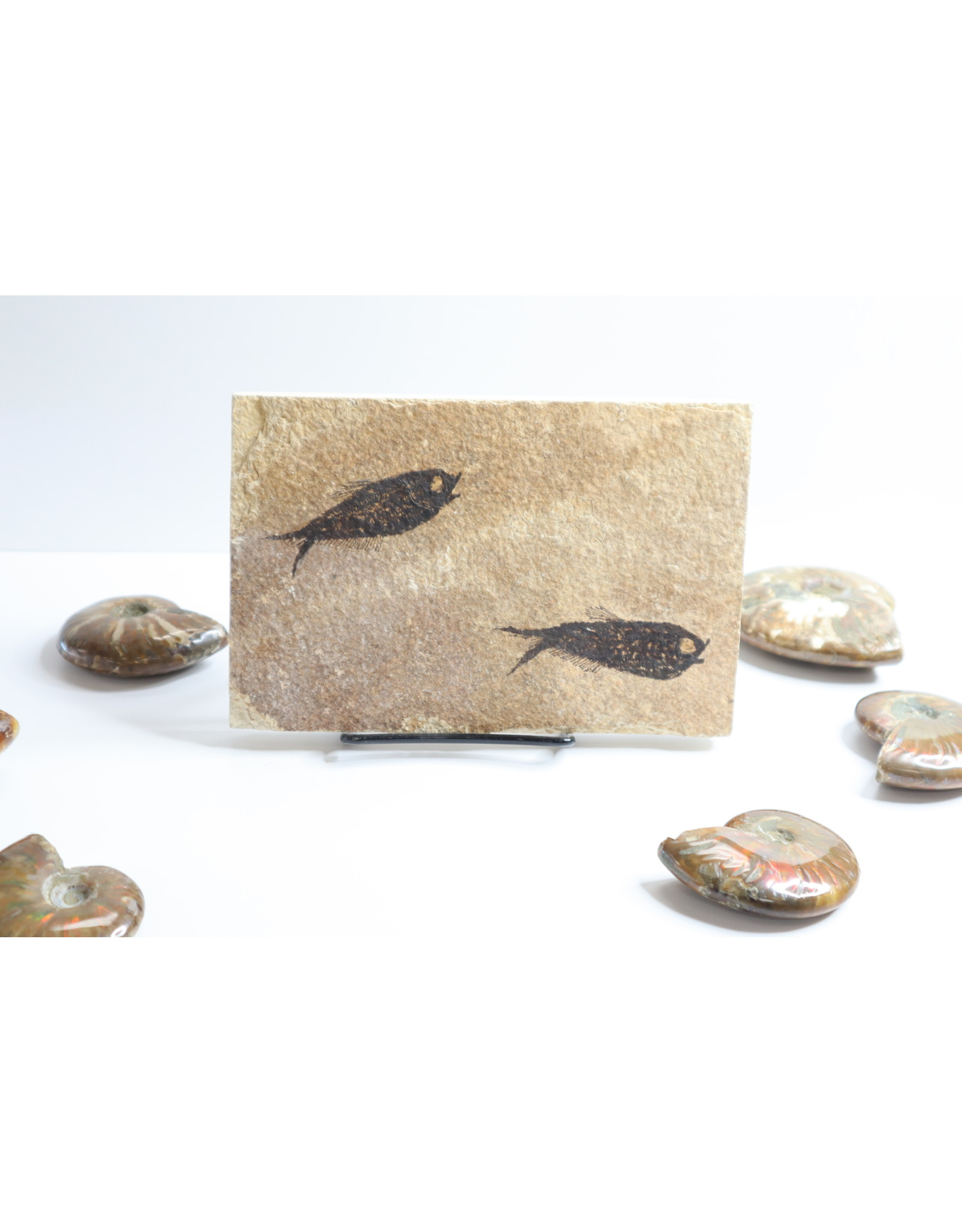 Fossilized Fish #7