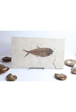 Fossilized Fish #9