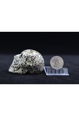 Dalmatian Jasper Skull