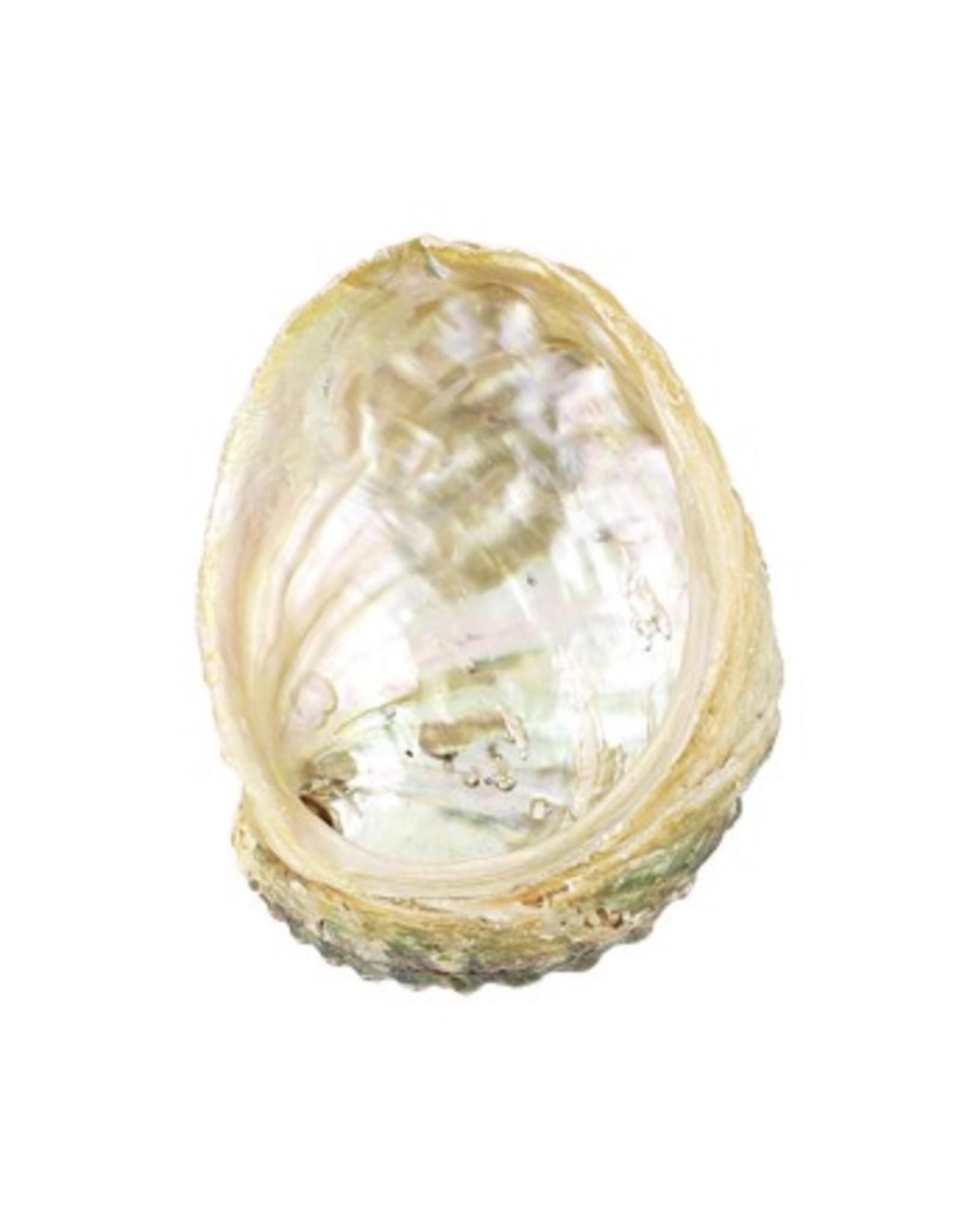 """Abalone Shell - 4-5"""""""