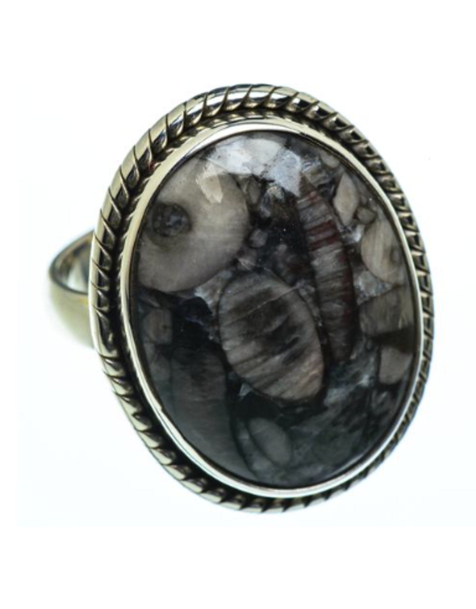 Crinoid Fossil Ring - Size 8