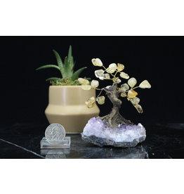 Citrine  Bonsai Tree on Amethyst 3.5 inch