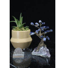Sodalite  Bonsai Tree on Amethyst 3.5 inch