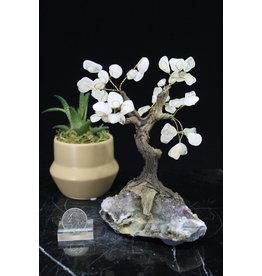 Clear Quartz  Bonsai Tree on Amethyst 5.5 inch