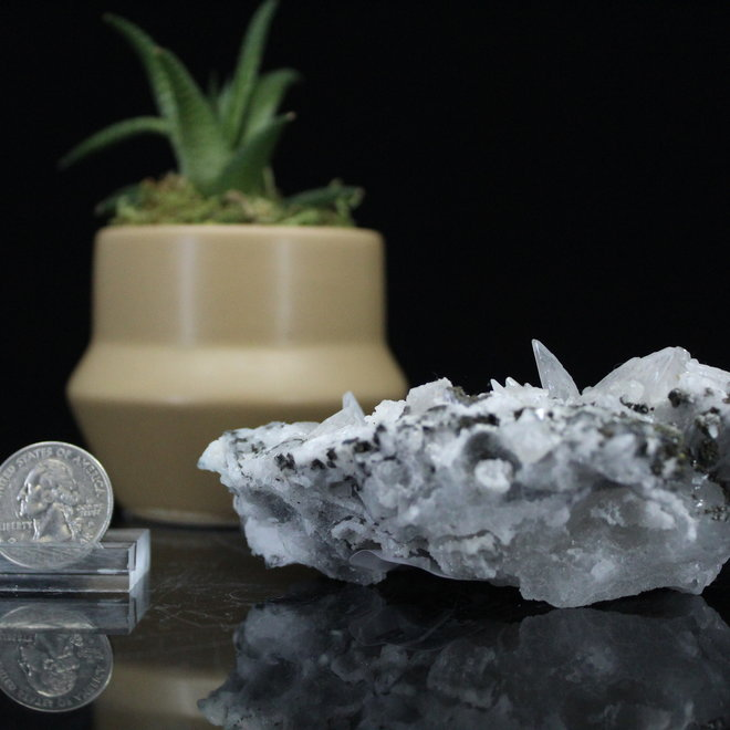 Blue Dogtooth Calcite with Pyrite Inclusions-Large
