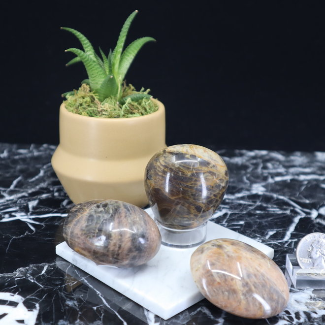 Black Moonstone Palm Pillow Stone-Large