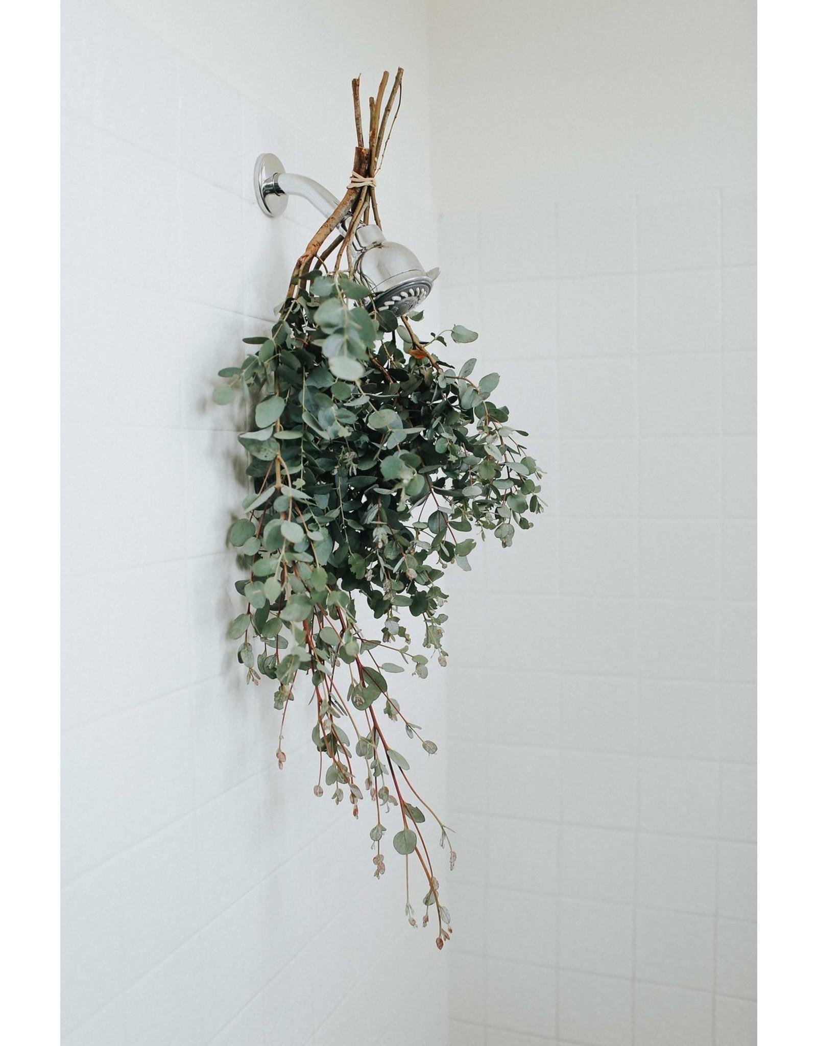 No Tox Life Eucalyptus Steam Shower Cubes - 6ct