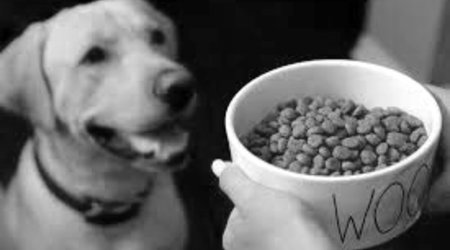 DRY FOOD DOG