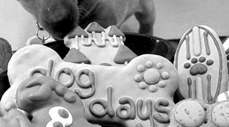 DOG TREATS/CHEWS