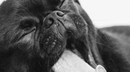 DOG BOWLS & DISHES