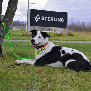 Sterling Dog Leash